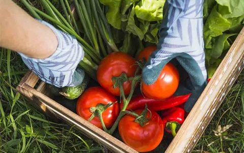 کدام مواد خوراکی بهترین رژیم غذایی هستند