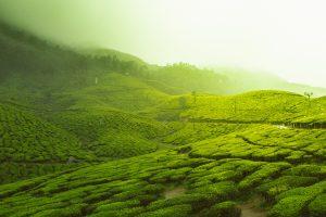 چگونه میتوانیم چای خوب را تشخیص دهیم؟