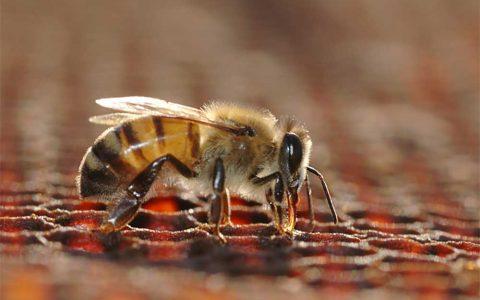 sabalan honey
