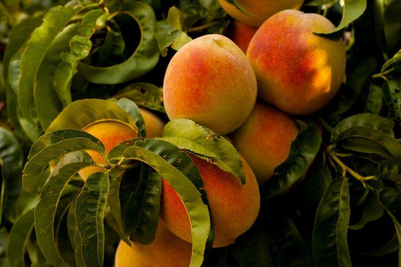 راهنمای خرید میوه تازه کدام میوه ها را نخریم - هلو