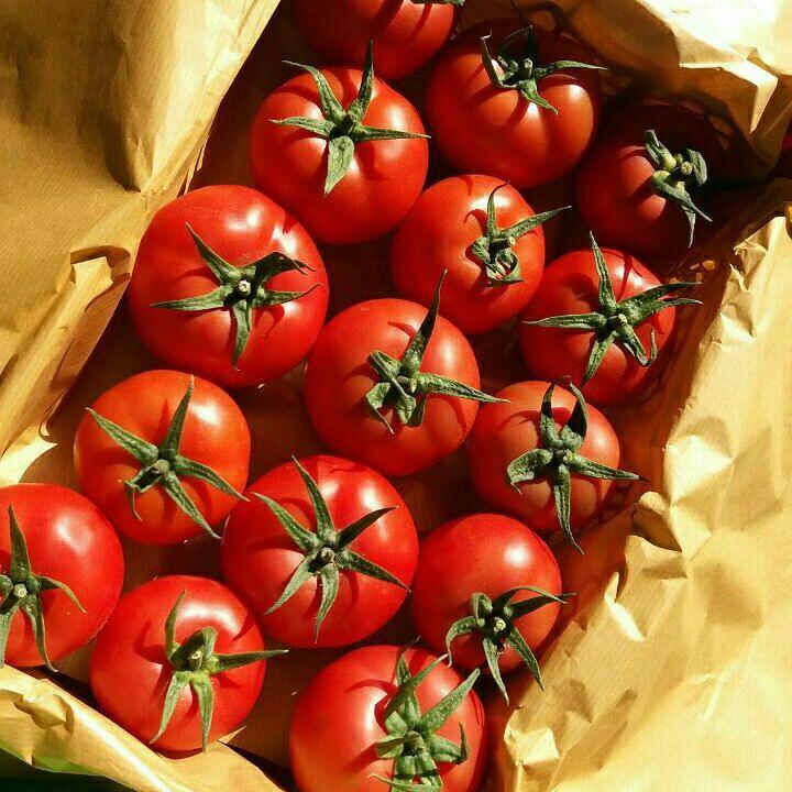 آغاز خرید حمایتی گوجه فرنگی